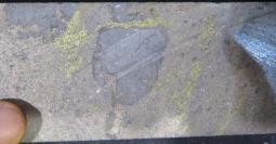 IMG_1797 - copia